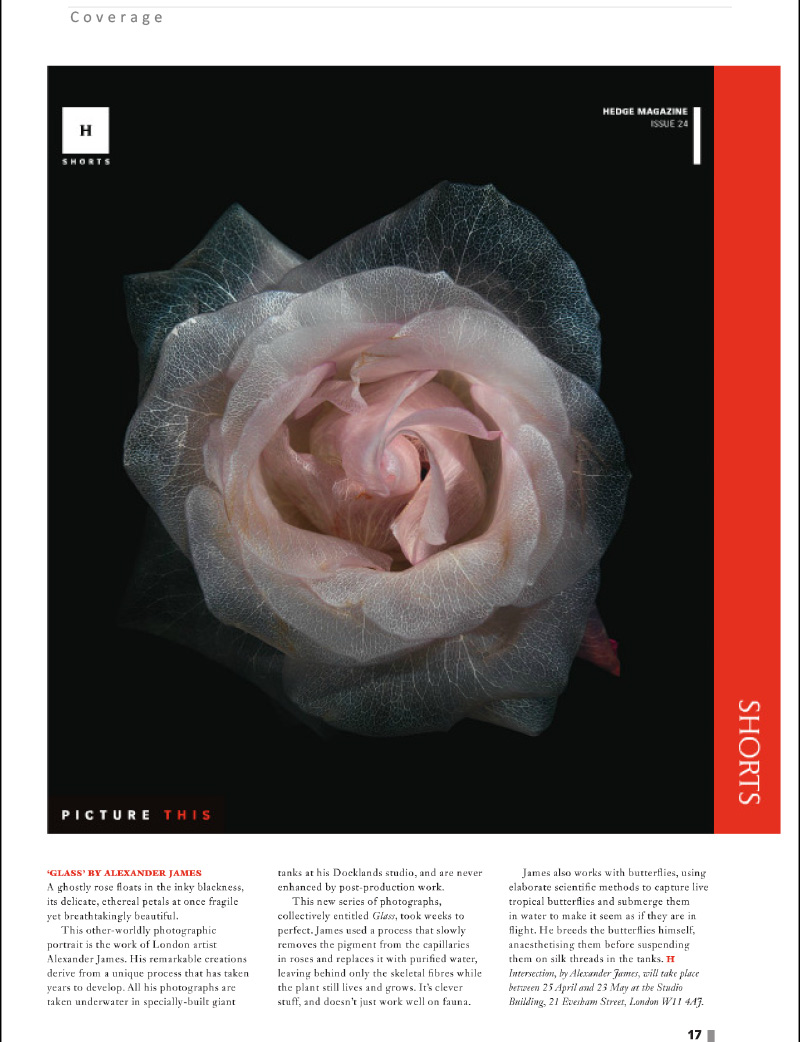 Hedge Magzine visit underwater photography vanitas exhibition INTERSECTION