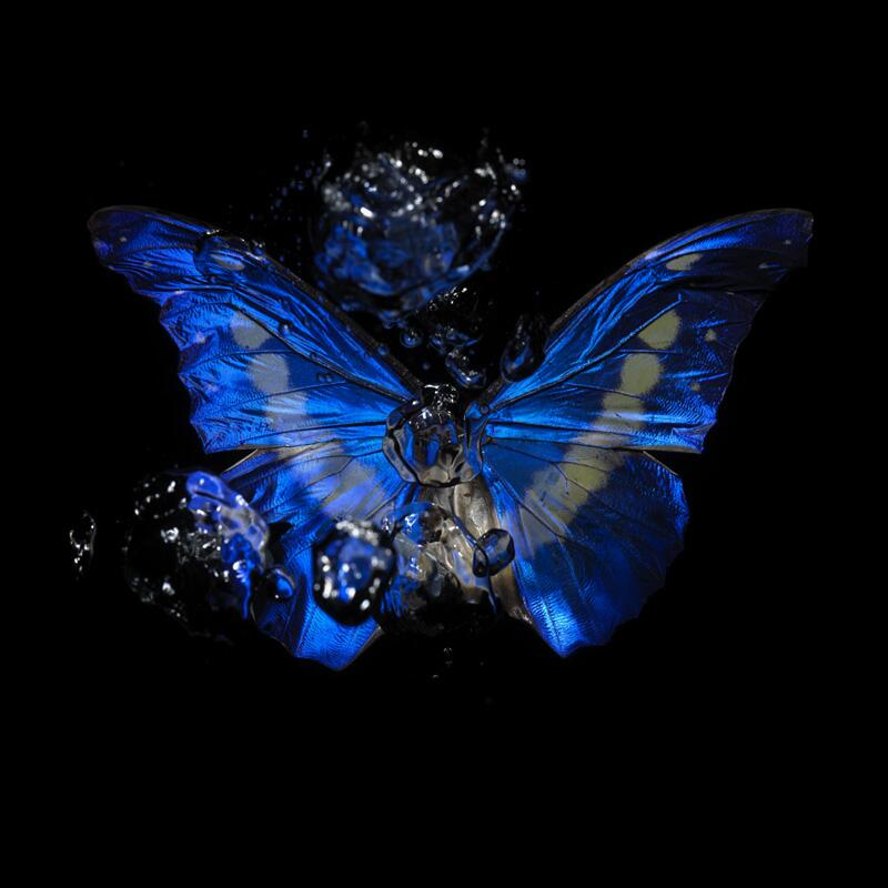 Morpho Rhetenor Helena underwater butterfly artwork goes to the Monsoon Art Collection