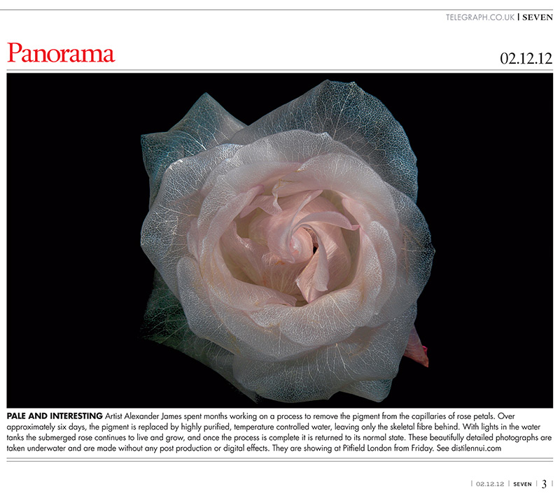 Sunday Telegraph arts and culture feature the surreal underwater glass like flower series