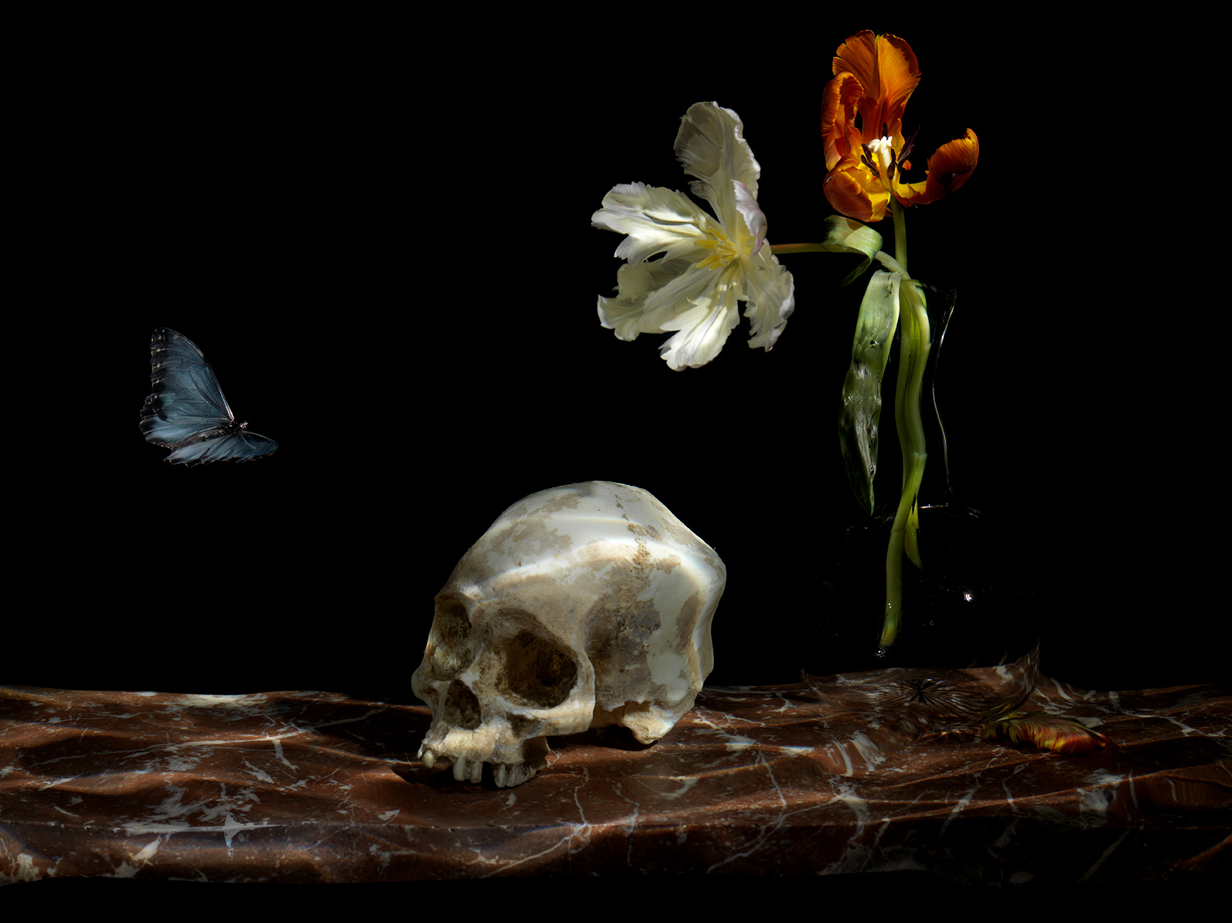 underwater Vanitas artwork The Great Leveller heads to the Donna Spaan Collection