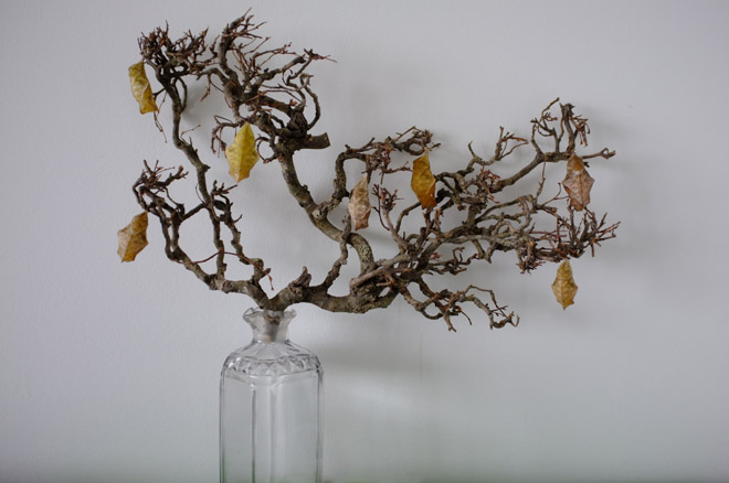scene production in the studio continues with a Petrified bonsai tree & Caligo Eurilochus butterfly pupae