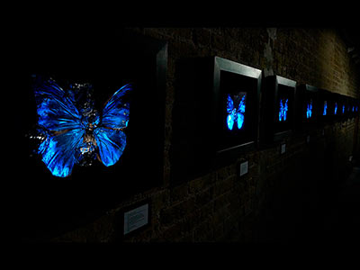 Death of the dream - exhibition schedule dates to see key Flag Butterfly Photographic Painting and Illuminated artworks